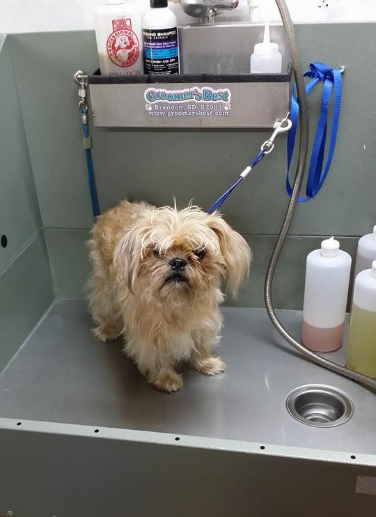 Dog Grooming Riverview