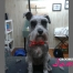 riverview dog grooming