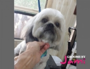 riverview-dog-grooming